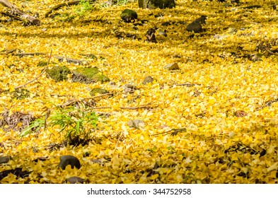 Blurry Ginkgo Autumn at The Mount Oyama, Japan.