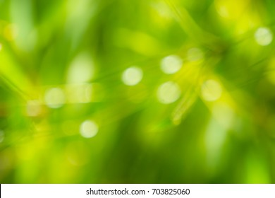 The blurry green background image is caused by reflections of water droplets on bamboo leaves.