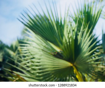 Blurry green leaves of a palm tree unique background photo