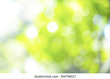 Blurry green nature for background