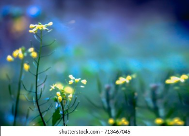 Blurry images of yellow flowers in vegetable plots, for backgrounds, peacefulness concepts.