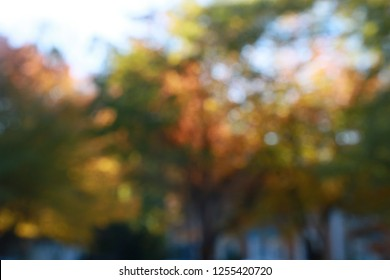 Blurry Leaves Changing Color from Green to Orange in Front of Victorian-Style Townhomes Backlit by the Late Afternoon Sun against a Clear Blue Sky in Burke, Virginia