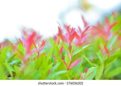 Blurry new green leaf on sunset