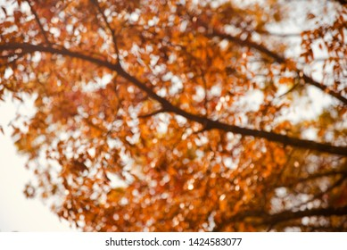 Blurry orange leaves of a tree isolated unique natural photo