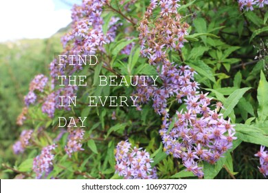 Blurry purple flowers with Inspirational quote - Find the beauty in every day