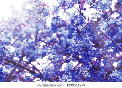Blurry retro aged photo of tree blossom in light glow. Selective focus, blur, bokeh. Watercolor painting effect. Blue violet colors. Vintage floral background.