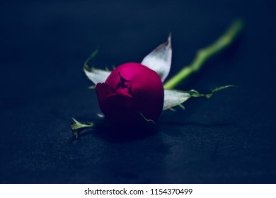 A blurry rose flower kept on a wooden surface isolated unique photo