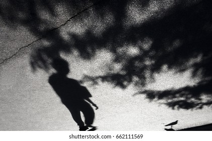 Blurry shadow of a boy, pigeon and treetops in black and white