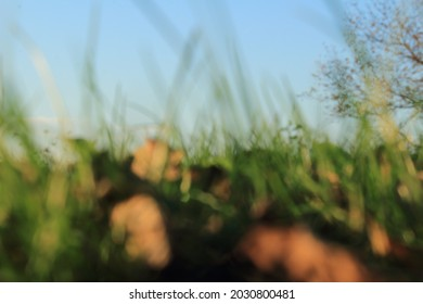 Blurry shapes of grass, leaves and the tree. Pastel like photo design. Great for background or as a quote template.