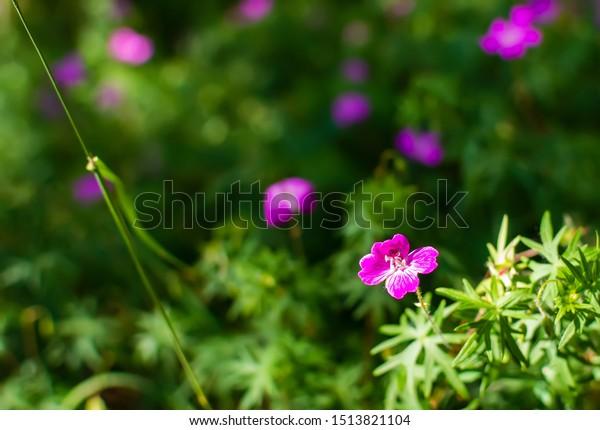 blurry-soft-gentle-background-many-600w-
