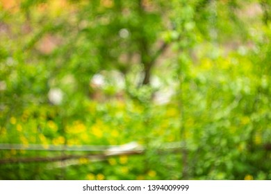 Blurry spring background. Park outdoor bokeh. Green bright garden wallpaper. Shiny day out of focus. Hollidays in the village. Summertime backdrop for poster. Summer noon.