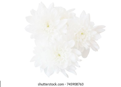 Blurry white flower, Close up petal of white Chrysanthemum flower or three white flower isolated use for web design and flower background