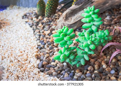 Blurs Cactus desert plant.