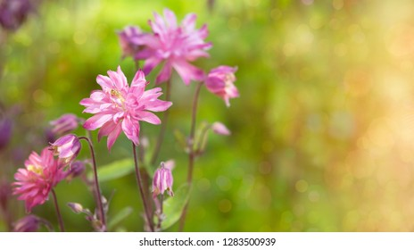 bneautifully simple flower bokeh
