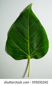 Bo leaf in the temple.