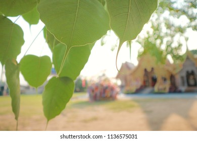 Bo leaf,bodhi leaf and lanna style buddhist temple in Chiang mai thailand,blurred