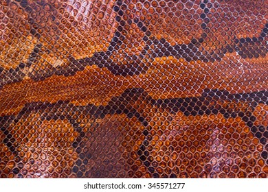 Similar Images, Stock Photos & Vectors of Boa or Python