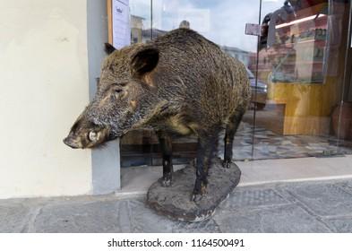 boar, embalmed, animal.