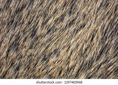 Boar fur animal carpet texture.