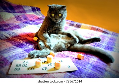 Board games. The cat plays in a lotto. Excitement.