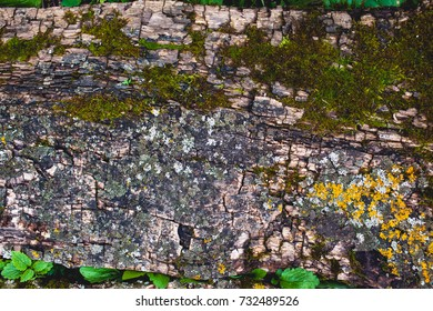 a board with moss