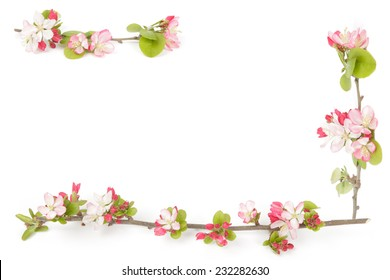 Boarder of pink and red crabapple flowers on a blank surface