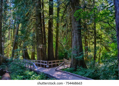 Boardwalk amid conifers in forest of the Grove of the patriarchs, Ohanapecosh, Mount Rainier National Park, Washington