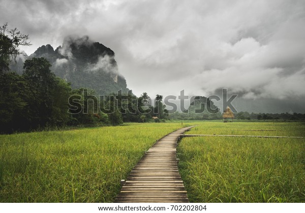 Boardwalk among the paddy fields