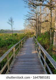 Boardwalk in Audobon Corkscrew Swamp Sanctuary, Florida Everglades Ecosystem - Nature Walking Trail, Protected Forest Swamp Ecosystem