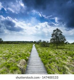 boardwalk bog landscape with cloud sky