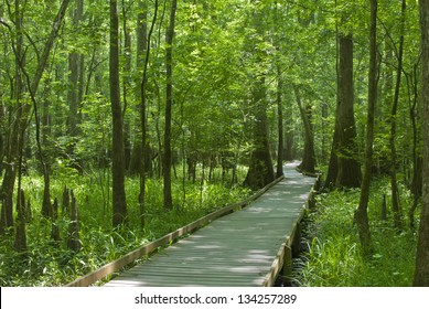 A boardwalk at Congaree Swamp National Park.