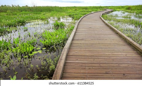Boardwalk curves through  a marsh and wetlands along Pintail Wildlife Drive at Cameron Prairie National Wildlife Refuge in Louisiana