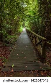 Boardwalk in dense rainforest in Niah cave Malaysia Borneo