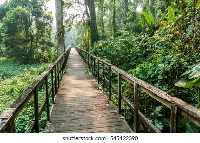 Boardwalk in eco-archaeological park Los Naranjos, Honduras