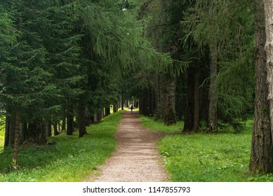 Boardwalk in forest. Footpath Winding through Green Forest. Dark forest and a road. Hiking Trail through Natural Spruce Tree Forest.