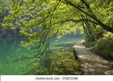 Boardwalk in the forest -Plitvice
