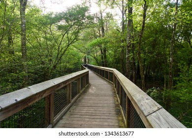 Boardwalk Leading into the Woods