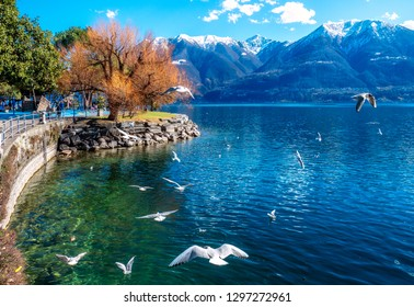 Boardwalk of Locarno with seagulls flying in front of the Montains