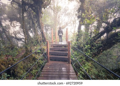 Boardwalk at the magic mossy forest on the top of Mount Brinchang in Cameron Highlands, Malaysia. Here passes the border between Perak and Pahang states