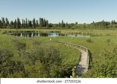 Boardwalk in a Marsh, Riding Mountain National Park, Manitoba, Canada