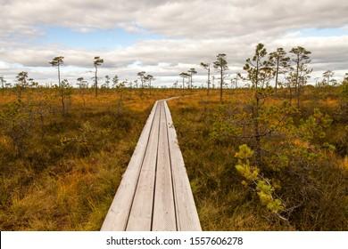 Boardwalk in marshland, Kuresoo bog, Estonia. Path at the beginning go straight and then turns right.