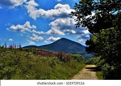 Boardwalk, Murlough National Nature Reserve, County Down, Northern Ireland