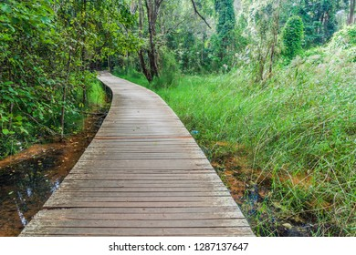 Boardwalk in National Kandawgyi Botanical gardens in Pyin Oo Lwin, Myanmar