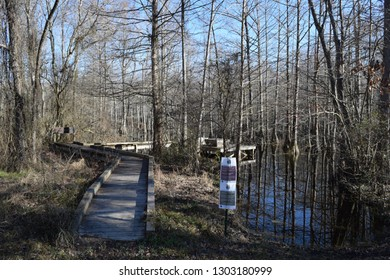 Boardwalk observation platform in Chakchiuma Swamp in Lee Tartt Nature Preserve in Grenada Mississippi