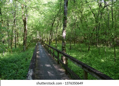 Boardwalk on the Natchez Trace Trail in Mississippi