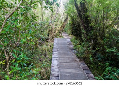 Boardwalk on a trekking trail in a forest in National Park Chiloe, Chile