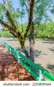 Boardwalk over a swampy mangrove forest at Hiron Point in Sundarbans, Bangladesh
