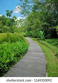 Boardwalk in the park in Singapore