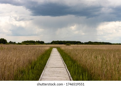 Boardwalk path in marshland bog Bubnow in Poleski National Park. Pathway in the middle, grass and reeds on sides. Nature trail Czahary. Poland, Europe.