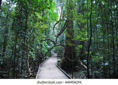 Boardwalk in the rainforest at the Mary Cairncross Scenic Reserve in Queensland, Australia